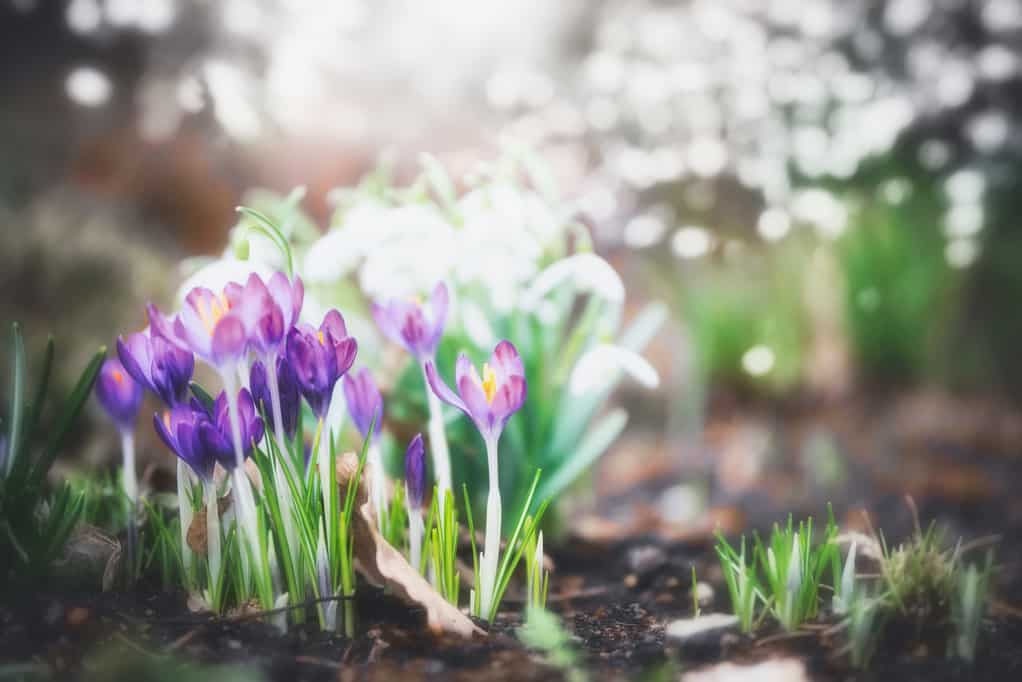 Spring flowers stay safe with pressure washing from Complete Power Wash in Hagerstown, MD